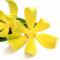 Αιθέριο Έλαιο Υλανγκ Υλανγκ (Ylang - Ylang) (BIO)